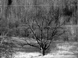tree triptych 01022015 (1)