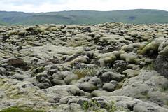 mousseux (orangemania) Tags: verde green island iceland moss vert majestic volcanic mousse islande icelandic le volcanique merveilleux majestueux