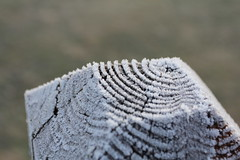 Frosting (Jane Inman Stormer) Tags: wood cold ice lines frost grain deck treering