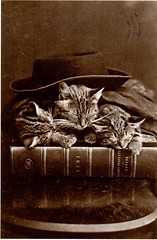 Black and White Cats, 1870 (booboo_babies) Tags: cats hat vintage book blackwhite 1800s 1870