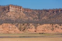 Chilojo Cliffs (Ring a Ding Ding) Tags: africa wild elephant nature canon landscape cliffs safari zimbabwe geology herd rockformation masvingo gonarezhou chilogorgelodge