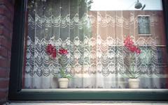 Gezellig (Arne Kuilman) Tags: street film window netherlands amsterdam rollei iso200 nederland scan gezellig raam vensterbank straat expiredfilm vitrage 3570 spectorcolor zoomx70 variorolleigon