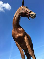 Blue Sky Horse (Mariska Boekema) Tags: horses horse pretty best mooi equestrian paard paarden anky kwpn amazingshot paardensport pfeerd brutalshot mariskaboekema