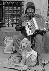 Mismatch (Finding Chris) Tags: musician dog housesofparliament stranger spaniel accordian railings busking whitehall