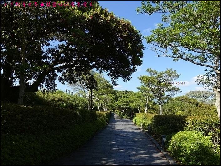 濟州島天帝淵瀑布 (4).JPG