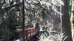 20160331_095027 (ks_bluechip) Tags: creek evans trails preserve sammamish usa2106