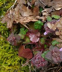DE LO MAS NATURAL. (aliciap.clausell) Tags: naturaleza musgo nature hojas bosque texturas rocio vegetacion renacer