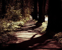 A Path To Something Better (thatmattrogers1) Tags: shadow woods path perspective splittone