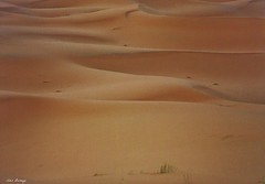 Arena Virgen - Sahara (Luis Bermejo Espin) Tags: africa travel naturaleza sahara arena desierto dunas tuareg saharauis magreb mundonatural tuaregs desiertos beduinos luisbermejoespn