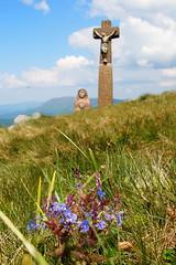 virág a kereszt alatt / flowers over the Cross (debreczeniemoke) Tags: flower spring cross peak hike tavasz virág gutin túra kereszt feketehegy mária jézus csúcs mogoşa gutinhegység munţiigutâi munţiigutin olympusem5 gutinmountains