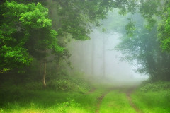 Into The Unknown (jo 1966) Tags: trees mist fog again lightroom savestheday coombehillwendover itwassomisty icouldhardlyseethe