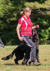 2016-05-22, IPO Training-4 (Falon167) Tags: dog shepherd rhonda german miles gsd germanshepherddog