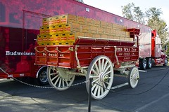 DSC_0019-a7 (stumbleon) Tags: california people horse beer truck team nikon nikond70s demonstration budweiser fairfield hitch peterbuilt heavyhorses anheuserbusch solanocounty clydsdale beerwagon demonstrationteam kttrailer horsehandelers