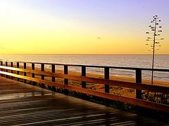 Pasarela (camus agp) Tags: espaa costa mar amanecer marbella orilla agaves panasonicfz150