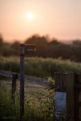 Sunset North Aston-3150 (toniertl) Tags: sunset contrast evening fields local signpost footpath sculptures oxfordshire somerton deddington northaston toniphotoxoncouk