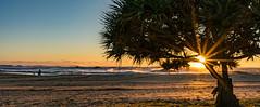 Pandanus sunrise (NettyA) Tags: winter sea panorama sun tree beach sunrise golden coast sand waves afterthestorm pano australia coastal qld queensland sunburst sunshinecoast pandanus 2016 moffatbeach sonya7r