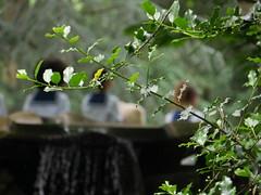 fotoshoot Ted in de verborgentuin (michieljacker) Tags: rotjeknor rotterdam park verborgentuin fotoshoot ted langebag nowenwow