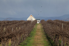IMG_9856a (ManFromOz) Tags: vineyards mudgee gemaxphotographics geoffsmith
