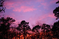 Cotton Candy Skies (nicolehartman) Tags: sunset sky nature weather canon skyscape skies south nj jersey treeline canoneos canonrebelxs