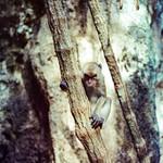 Monkey on the Way thumbnail