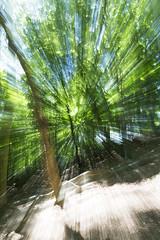 BWP_9425 (b_jw40) Tags: zoom burst tree forest green leaf sun