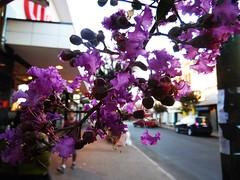 oh... (Christal II) Tags: tre trees purple love loveit nature centralpark