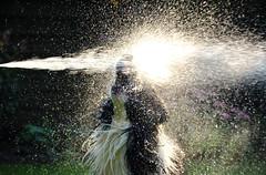 Summer Shower 2 (plant.wendy) Tags: dog bordercollie border collie black white summer sun sunshine water wet drops hose backlight ray fun pet home green grass garden nice day