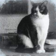 Tola (Egg2704) Tags: gato gatos cat cats pet pets tola animal animales animalia naturaleza blancoynegro byn bw egg2704 wewanttobefree