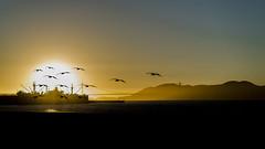 SUNSET (DROSAN DEM) Tags: birds aves sunset ocaso atardecer san francisco usa golden gate bridge puete puente nubes clouds sky cielo contraluz backligth composition composicion
