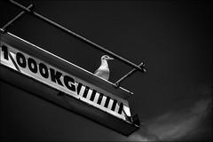 Prtentieuse! (vedebe) Tags: mouette animaux oiseaux noiretblanc netb nb bw monochrome bateaux