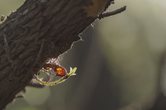 Cocoon (Dei's Light) Tags: italy sardegna sardinia natura nature bosco foresta wood albero ramo legno bozzolo cocoon animale rametto foglia