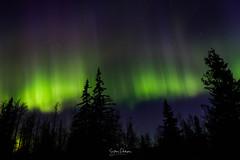 Auroras (spwasilla) Tags: aurora auroraborealis northernlights light night nightsky canon7d tokina1116mm alaska longexposure trees