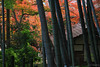 Kunen-an Hermitage, Villa and Garden (tomosang R32m) Tags: autumn fall japan garden leaf 紅葉 秋 hermitage saga 佐賀 kunenan kanzaki 九年庵 神埼 数寄屋造り