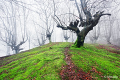 path in the forest (Mimadeo) Tags: morning trees light sunlight green wet leaves fog mystery forest landscape moss branch path magic foggy trail fairy fantasy ethereal mysterious trunk hazy magical footpath pathway