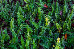 IMG_2116.jpg (OlleOO) Tags: skog valhall woods pattern sweden