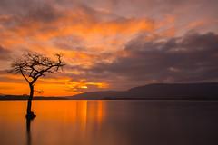 Millarochy Bay Sunset (intrepidscotland) Tags: sunset tree bay east loch lomond millarochy