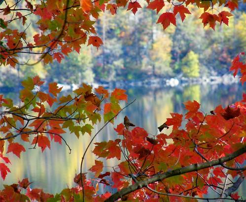 Through the Autumn Leaves