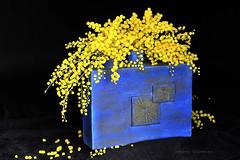 ...Du soleil  ..... (Hélène Quintaine) Tags: mimosa création composition soleil fleur vase jaune bleu noir senteur parfum nature morte naturemorte