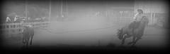 Bueno de brao (Eduardo Amorim) Tags: brazil horses horse southamerica brasil caballo cheval caballos lazo kuh cow rind cattle cows ox ganado cavalos oxen mucca pferde cavalli cavallo cavalo gauchos pferd riograndedosul pampa bois khe vache vaca vacas campanha brsil vaches boi chevaux gaucho buey  lasso amricadosul mucche lao fronteira boeuf vieh gacho amriquedusud  gachos  boeufs buoi sudamrica rinder gado suramrica amricadelsur bueyes sdamerika mue pinheiromachado  bestiami btail americadelsud americameridionale campeiros campeiro