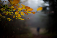 leaves (paul.wienerroither) Tags: autumn light fall nature colors leaves canon dark walking photography 50mm austria