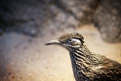 Bird Blijdorp (siebe ) Tags: holland dutch animal zoo rotterdam blijdorp nederland thenetherlands dierentuin 2014 diergaardeblijdorp siebebaardafotografie