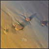 life (VIE) (PATRICE OUELLET - off) Tags: life vie patricephotographiste