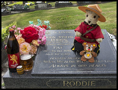Dec 04 - Ted Toasting Dad's 25th Anniversary with a Bottle of Lion Red! (Reflective Kiwi %-)) Tags: bear red ted beer outfit dad anniversary lion royal police canadian 25 mounted years tribute 1989 dads favourite dec04 lager rosetta essentials crmp decdiary2014 essentialbears