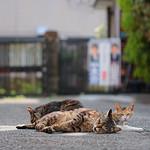 Three Cats at Komae thumbnail