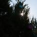 Trees_of_Loop_360_2014_117