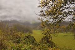 NEBBIA COLLI (zozoros) Tags: autumn fall fog colours nebbia autunno colori