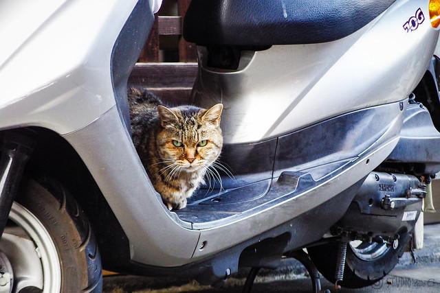Today's Cat@2014-12-13