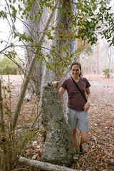 Baobab root!