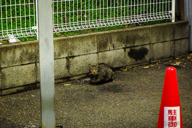 Today's Cat@2015-01-08