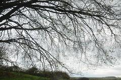Unter der Buche von Lttensee; Bergenhusen, Stapelholm (2) (Chironius) Tags: autumn trees tree germany deutschland rboles herbst herfst boom arbres rbol bok alemania otoo albero autunno bume allemagne arbre rvore baum hst trd germania schleswigholstein gegenlicht fagus buche jesie beuken  ogie aa   pomie buchen  fagaceae faia  niemcy rotbuche fagales rosids bergenhusen   efterret stapelholm  buchengewchse pomienie kayn buchenartige fagoideae szlezwigholsztyn fabids